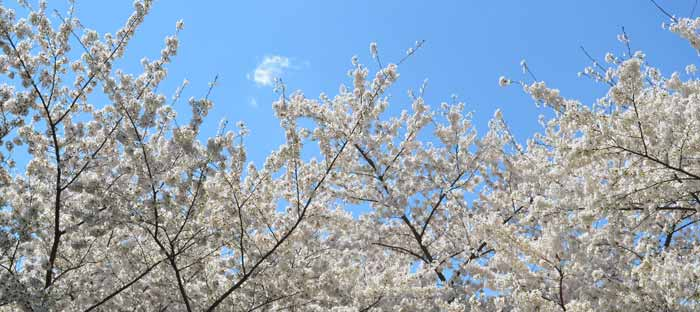 Spring is a wonderful time to enjoy shopping, dining, and the wonderful sights in Lambertville, Hunterdon County NJ